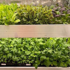 Indoor Vertical Hydroponic Farm.jpg