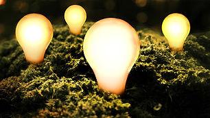 team bulbs.jpg