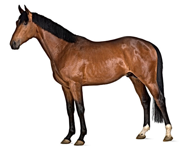 horse-cut-out-for-interactive-horse.jpg
