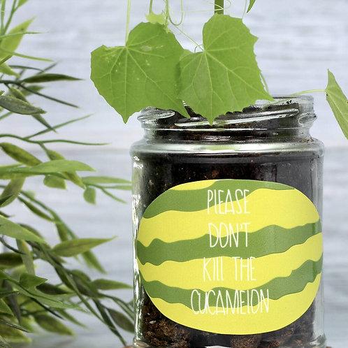 Personalised 'Don't Kill Me' Mini Melons Jar Grow Kit