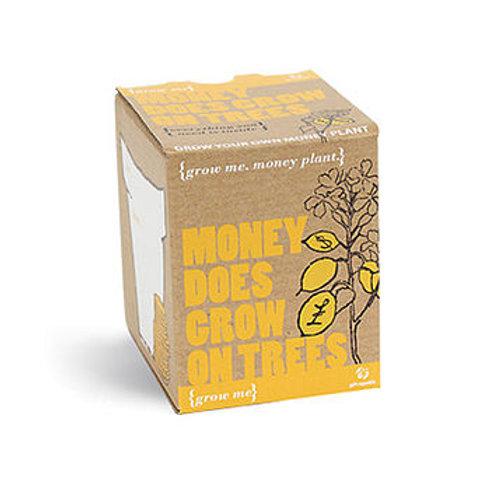 Grow Me 'Money Tree' Plant Kit