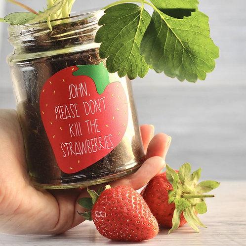 Personalised 'Don't Kill Me' Strawberry Jar Grow Kit