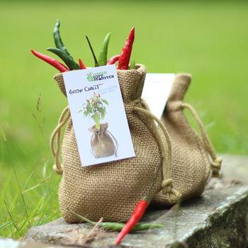Chilli growing jute bag set