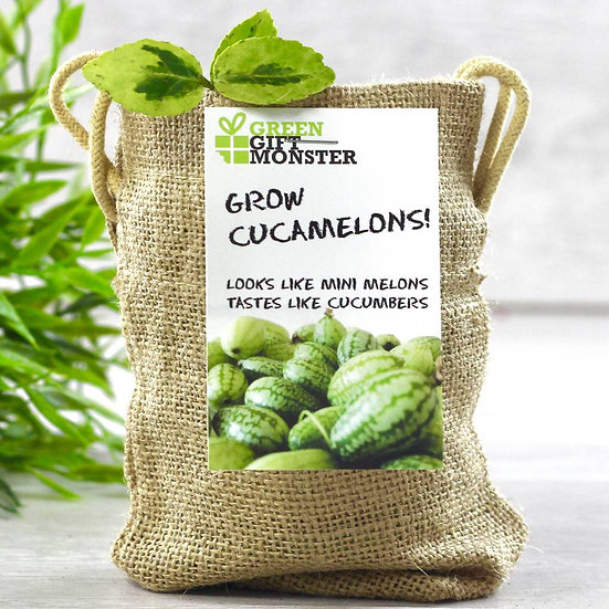 Grow Your Own Mini Melons Set