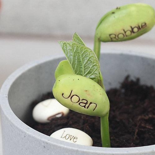 Personalised Name Bean Seeds