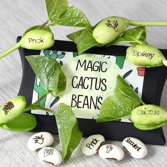 Magic Cactus bean grow set