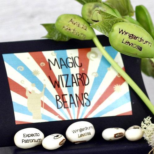 Magic Wizard Bean Grow Set