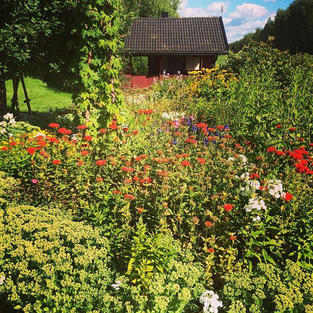 #finnishsummer #katiskanmäki #flowers #k
