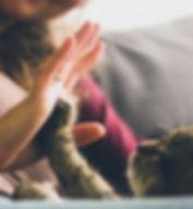 cat high five.jpg