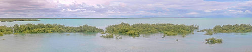 Roebuck Bay Mangroves High Tide