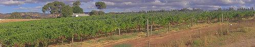 Swan Rver Winery Upper Swan