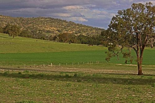 Bullsbrook Hills