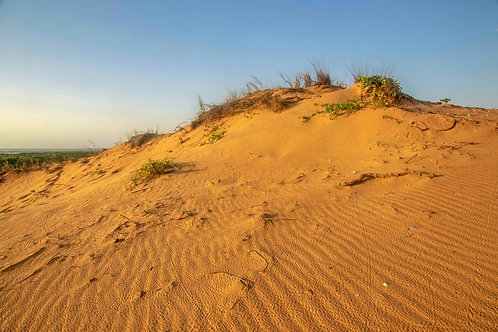 Kennedy Hill Desert