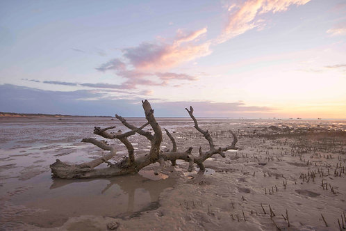 Roebuck Bay Log Sunrise