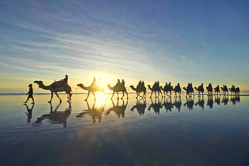 Cable Beach Camel