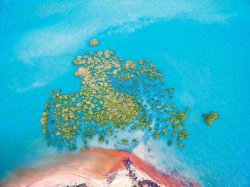 Town Beach Mangroves King Tide