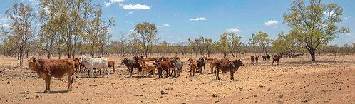 Heard Of Cattle, Mount Elizabeth Station
