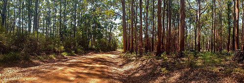 Forest Contrary Road