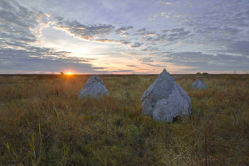 Dampier Creek Termite Mounds Sunrise