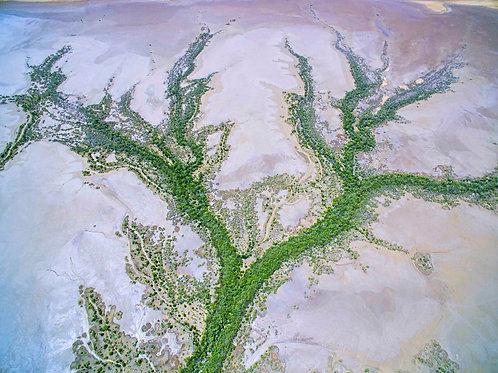 King Tide Mud Flats