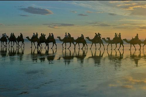 Cable Beach Camel Train