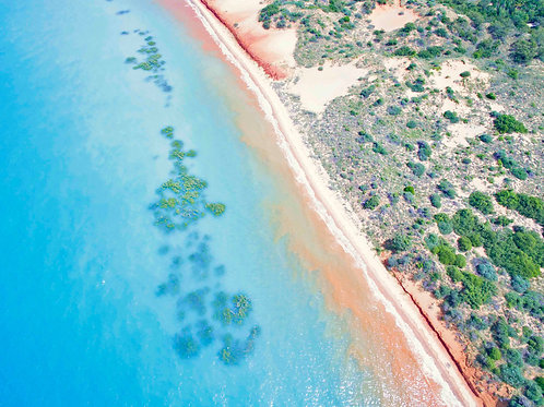 Roebuck Bay High TIde Mangroves