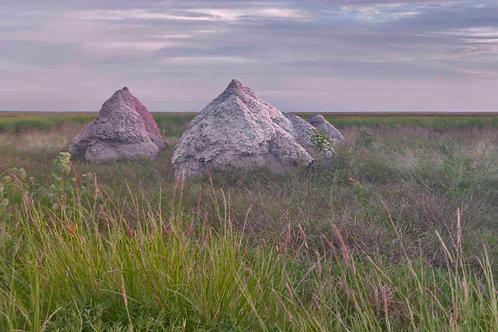 Roebuck Plains Termite Mounts