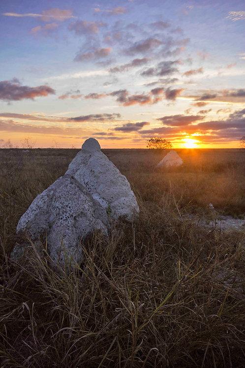 Dampier Creek Termite Mounts