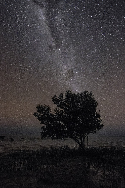Mangrove Tree Under The Stars And Milky Way