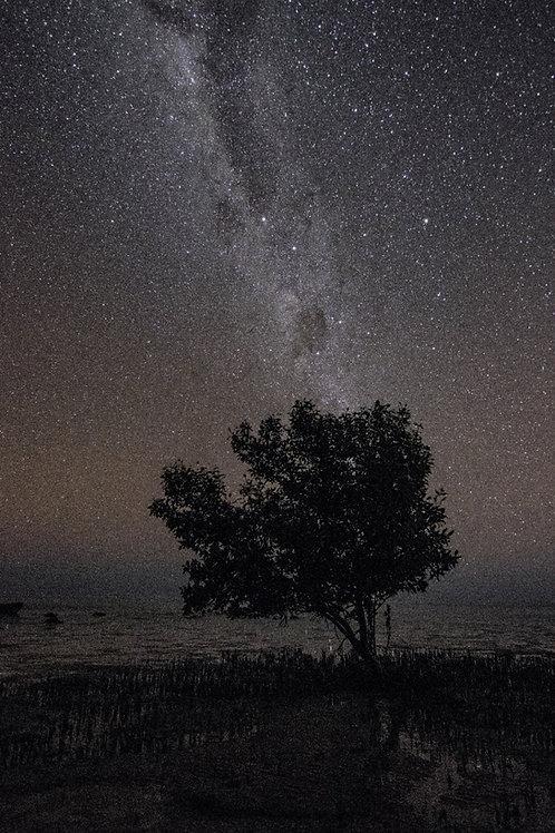 Mangrove Tree Under The Stars And Milky Way