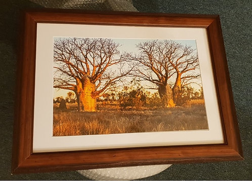 Sunset Boababs A3 Framed Print