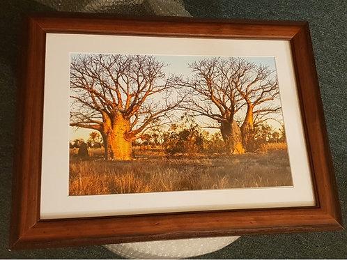 Sunset Boababs A3 Framed Print