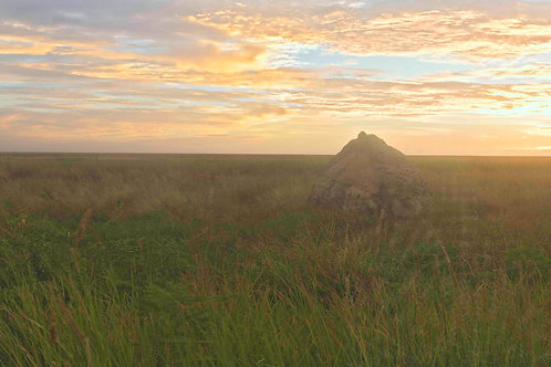 Roebuck Plains Termite Mounts Sunset