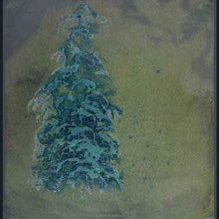 Pinewood (frame).jpg