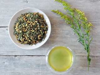 Japan Genmaicha is August's Tea of the Month