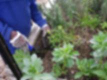 Willow Garden 3.JPG