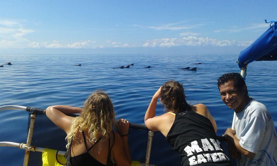 Eco-volunteers whale watching in Timor-Leste