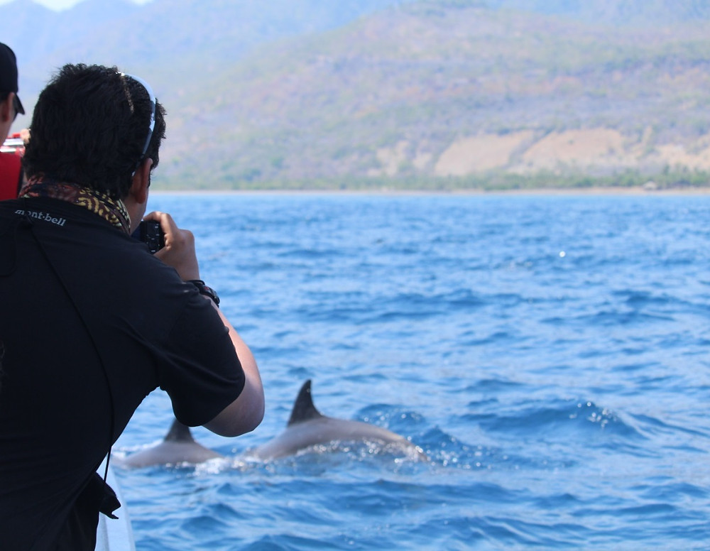 Whale and dolphin watching off Atauro Island, Timor-Leste