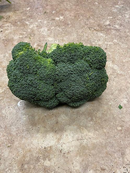 Broccoli - bunch