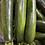 Thumbnail: Zucchini (medium) - each