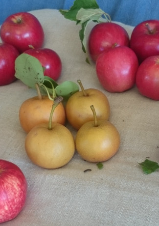 organic heritage apples and nashi pears