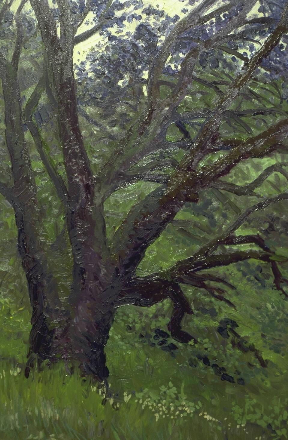 BearValley oak