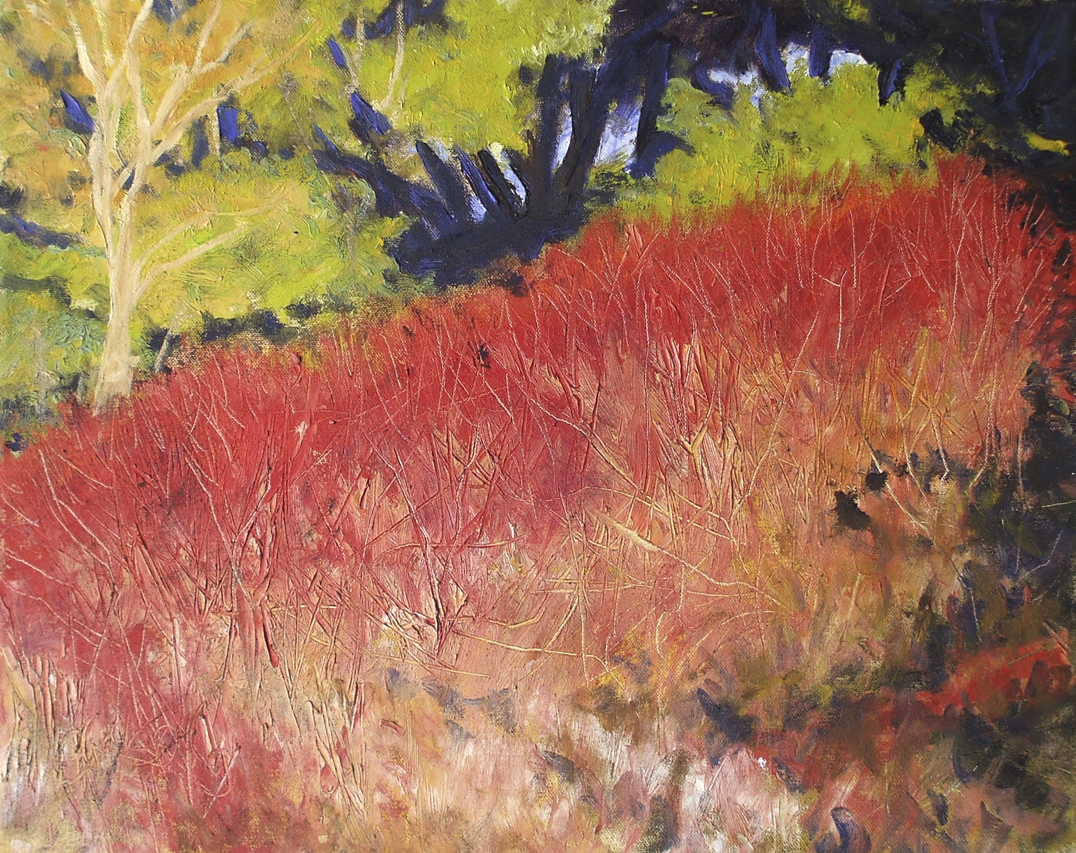 Bear.Valley.Red.Willow.2013