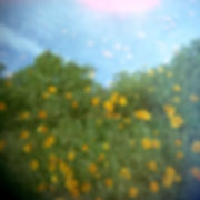 poppy_2exp.jpg