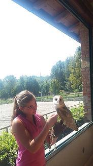 falconierie per un giorno,corso falconeria,foto rapaci