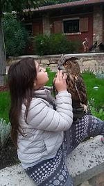 falconeria didattica,gufo reale europeo,rapaci italiani,falconiere,arte falconeria
