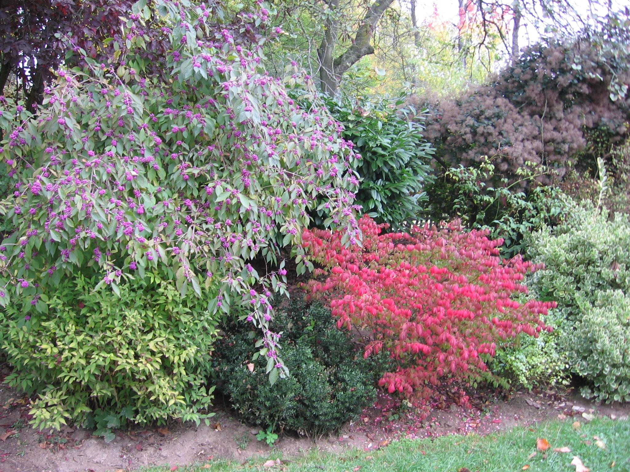 Schöner Herbstaspekt !