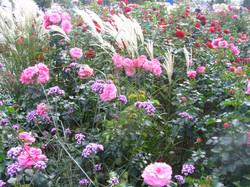 Rosen und Gräser