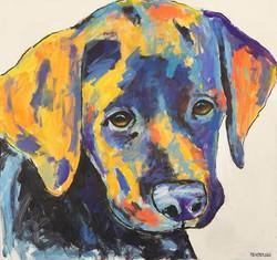Josie Pup
