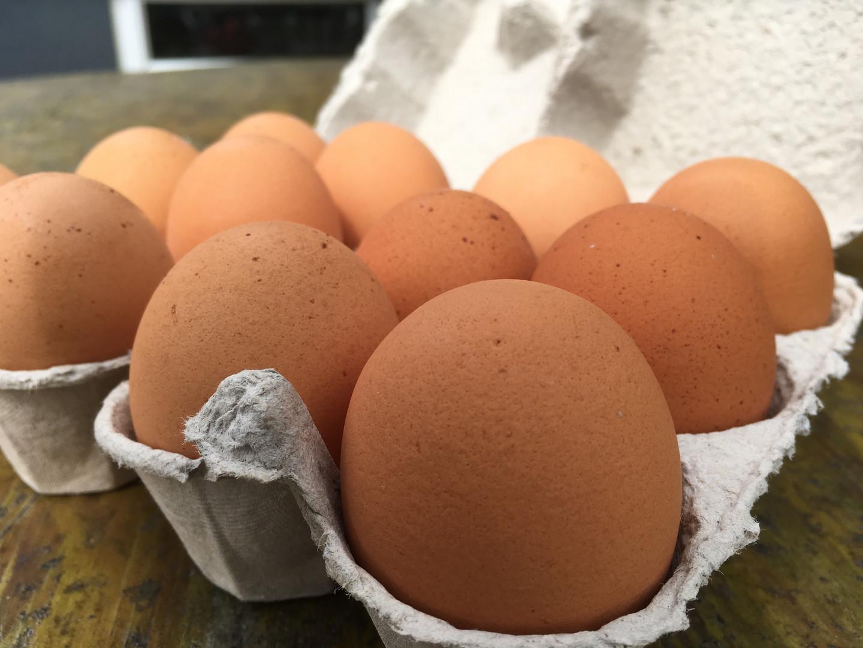 Organic Eggs from Springles Farm